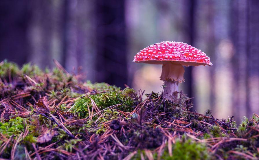 Most Powerful Health Benefits Of Cordyceps Mushroom